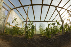 Inside greenhouse Stock Photography