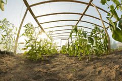 Inside greenhouse Royalty Free Stock Image