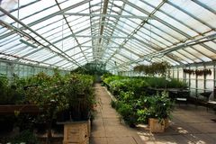 Inside a greenhouse full of plants and flowers Stock Photos