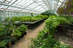 Inside a greenhouse full of plants and flowers Stock Image