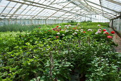Inside a greenhouse full of plants and flowers Royalty Free Stock Photos