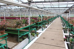 Inside the greenhouse Stock Image