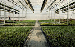 Inside Greenhouse and Nursery Royalty Free Stock Photos