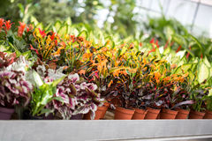 Inside greenhouse with plants growing Stock Photo
