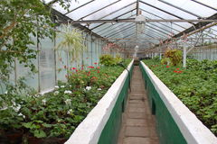 Inside the greenhouse Royalty Free Stock Photos