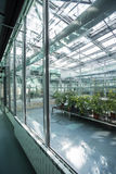 Inside a greenhouse Royalty Free Stock Image