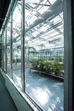 Inside a greenhouse Stock Photography