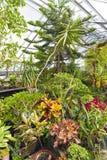 Inside Greenhouse Stock Photo