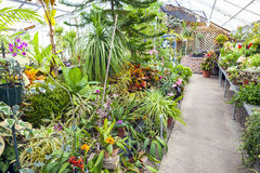 Inside Greenhouse Royalty Free Stock Images