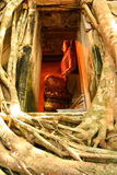 Inside heart2. The bodh tree on the roof of Bangkoog Temple in Thailand Royalty Free Stock Photo