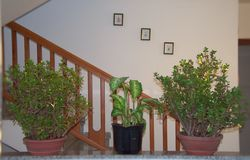 Interior of a house with three pot plants royalty free stock images