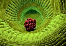 Inside human organism view. Virus in organism. Organic anatomy structure Royalty Free Stock Photo