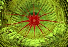 Inside human organism view. Virus in organism. Organic anatomy structure Stock Photos