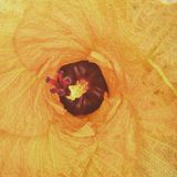 Inside kwiatu Bali Indonezja czerwieni kolor żółty Zdjęcie Stock
