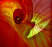Inside Leaf. Red leaf Royalty Free Stock Photography
