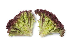 Inside Lollo Rosso lettuce Royalty Free Stock Images