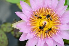 Inside lotus capel Stock Photos