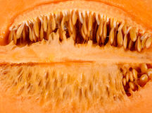 Inside Melon with seed background Stock Image