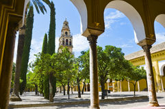 Inside the Mezquita in Cordoba, Spain. A big courtyard with orange trees and cypresses. A belfry in the background Royalty Free Stock Photo
