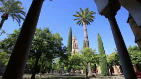 Inside the mezquita (a surprising mixture of mosque and cathedral) in Cordoba, Spain. A big courtyard with orange trees and cypresses. Bell tower in the stock video