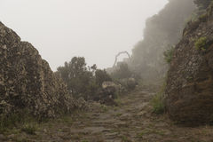 Inside mountains of El Hierro Island Stock Photos