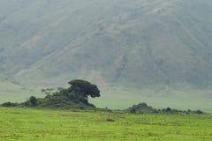 Inside Ngorongoro crater in Tanzania Stock Photo