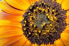Inside night sunflower Stock Images