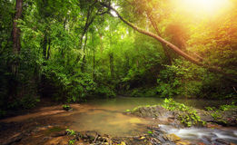 Inside in rainforest jungle with tropical plants and sun light Stock Image