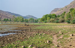 Inside ranthambhore national park Royalty Free Stock Photography