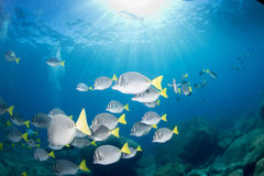 Inside a school of fish underwater Stock Images