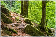 Inside the Schwarzwald Black Forest royalty free stock images