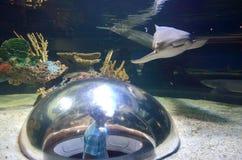 Inside the shark tank Stock Photo