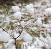 Inside The Snow Umbel Royalty Free Stock Photos