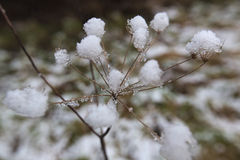 Inside The Snow Umbel Royalty Free Stock Images