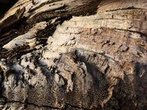 Inside of split wood tree bark texture Stock Image