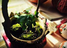 Inside Springtime Sprouts Royalty Free Stock Photo
