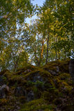 Inside summer mixed  Karelian forest.  Stock Images