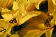 Inside a yellow flower Royalty Free Stock Images