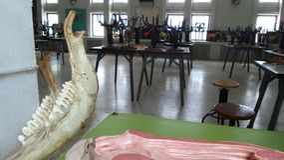 Inside Zwierzęcy anatomii nauczania lab Fotografia Royalty Free