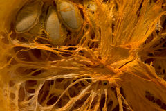 The insides of the pumpkin Stock Photo