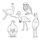 Insieme africano di vettore del fumetto di Owl Ostrich Crane Vulture Stork del libro da colorare dell'uccello illustrazione vettoriale