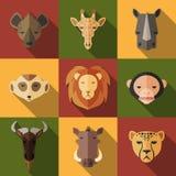 Insieme animale del ritratto con progettazione piana Fotografia Stock