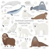 Insieme artico dell'animale Orso polare bianco, narvalo, balena, bue di muschio, guarnizione, tricheco, volpe artica, ermellino,  illustrazione di stock