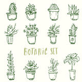 Insieme botanico Fiori del cactus Fotografie Stock
