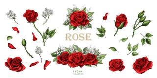 Insieme colorato degli elementi disegnati a mano dell'illustrazione delle rose rosse royalty illustrazione gratis