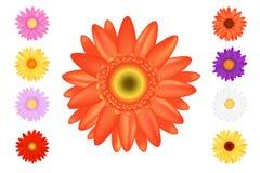 Insieme Colourful di Gerbers. Vettore Immagine Stock
