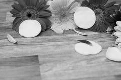 Insieme degli accessori della stazione termale su fondo di legno, dal suo fronte con il cuscinetto di cotone fotografia stock