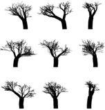 Insieme degli alberi di inverno Fotografia Stock Libera da Diritti
