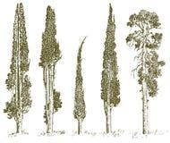 Insieme degli alberi disegnati a mano illustrazione di vettore del pino e del cipresso italiano, simboli incisi di sud, semprever illustrazione di stock