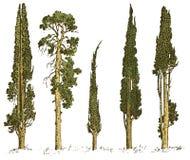 Insieme degli alberi disegnati a mano illustrazione di vettore del pino e del cipresso italiano, simboli incisi di sud, semprever royalty illustrazione gratis